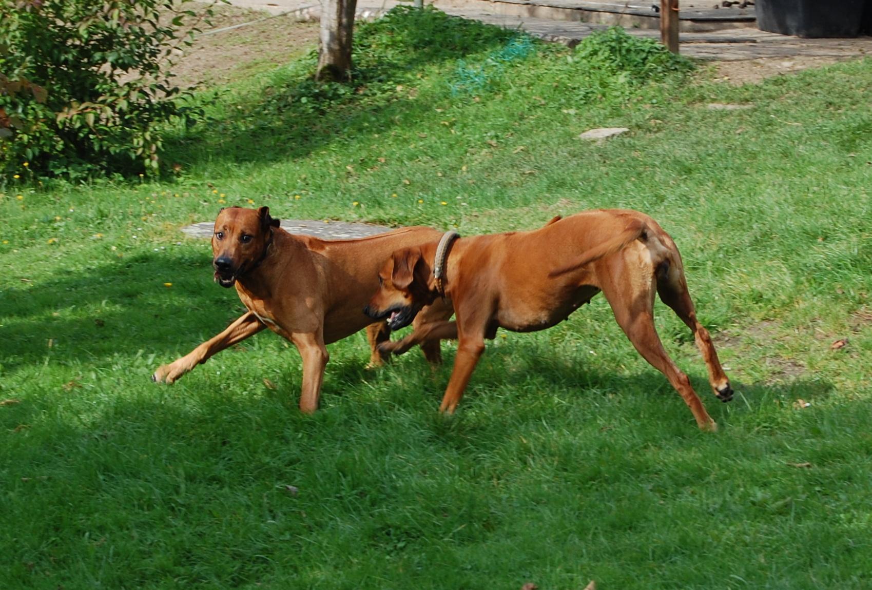 Dodger und Amber